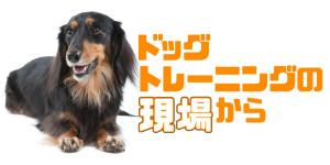 corner_dogtraining